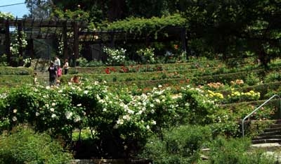 Insider tips for things to see and do in berkeley Berkeley rose garden