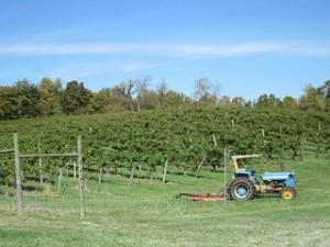 tractor, Fincastle Vineyard