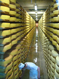 """Gruyere cheese on aging racks"