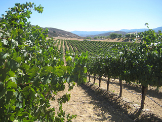 &quot;Leoness Cellars vineyards&quot;