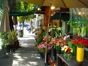 Marin county, mill valley, flowers, travel