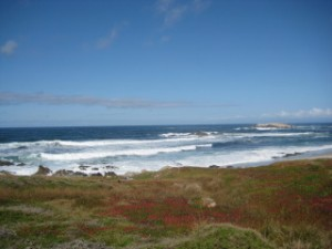 Monterey, pacific ocean, travel, nancy d. brown
