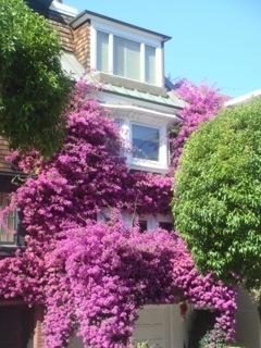 Pacific Heights, San Francisco, neighborhood, travel, Nancy D. Brown