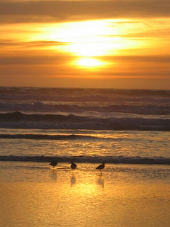 &quot;Pajaro Dunes sunset&quot;