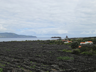 Pico Island, vineards