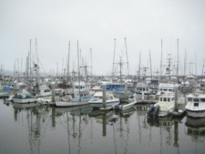 Pillar Point Harbor, Half Moon Bay, Insider Tips, Things to see and do, California, Nancy D. Brown, travel