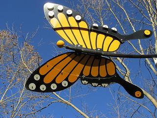 Monarch butterfly, Senza, Napa, California