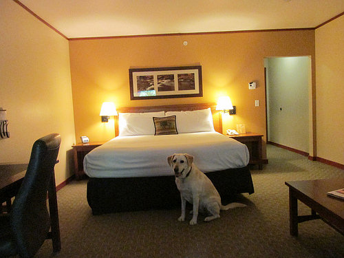 """Skamania Lodge"" pet-friendly hotel room"
