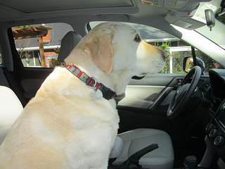 Stella, subaru road trip