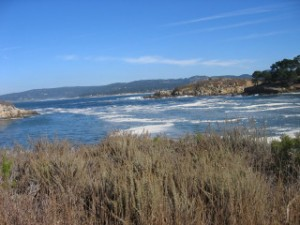 Whalers Cove, Point Lobos, California, travel, nancy d. brown