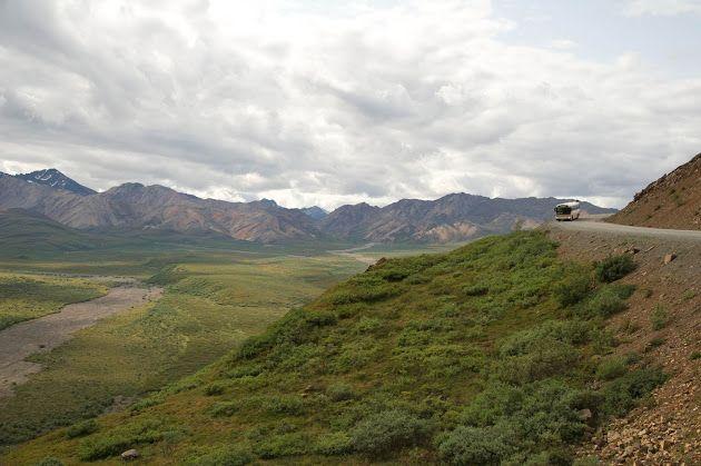 Denali, Alaska, Wildlike