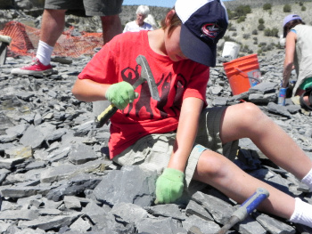 Digging for trilobites at U-Dig Fossils in Utah