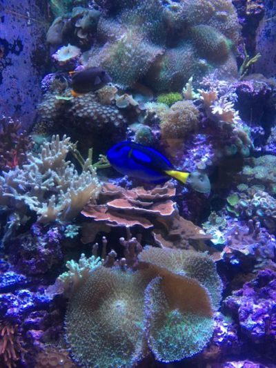 Sf aquarium wedding