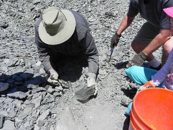 A digging for trilobite demo