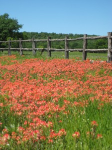 Lady Bird Johnson launched the highway Beautification Act in Texas resulting in masses of wild flowers along the Texas highways. Photo by Luxury Travel Writer Nancy D. Brown