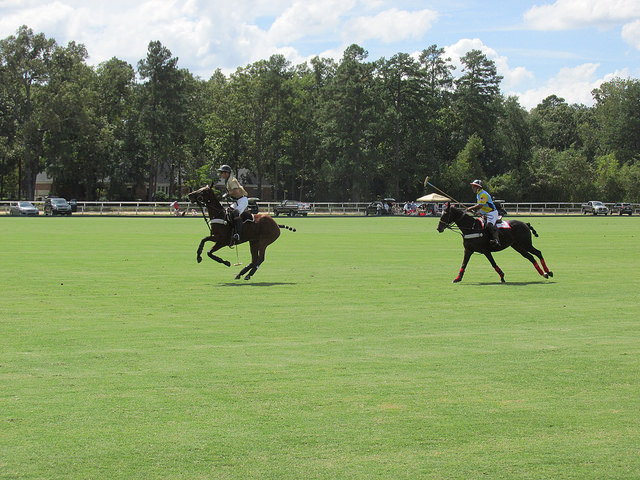 polo pony, aiken polo club, whitney field, aiken, south carolina