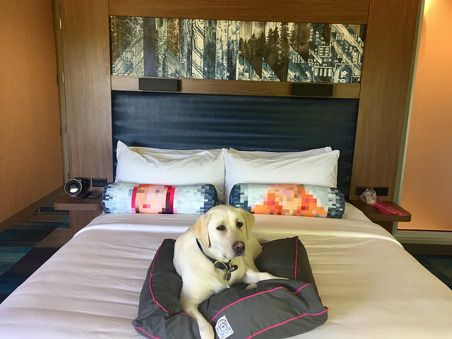 Pet Friendly Beaverton Hotel Hillsboro