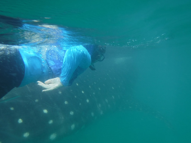 nancy d brown, whale shark swim, swim with whale sharks, cancun, mexico