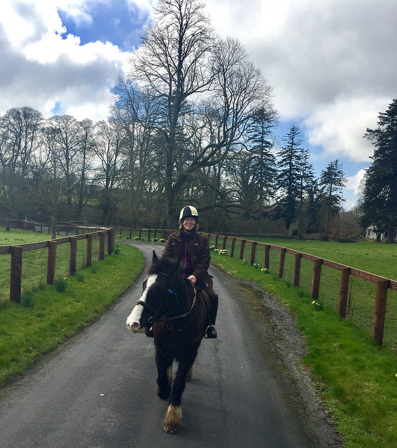 horse riding, horse trekking, ballyhannon house, county clare, ireland, nancy d brown, irish cob horse