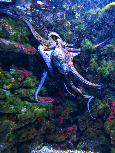 biarritz aquarium, octopus, france, basque coast