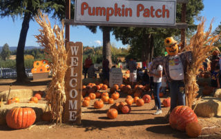 boa vista pumpkin patch, 5 Tips for apple hill apple picking, eldorado county pumpkin patch