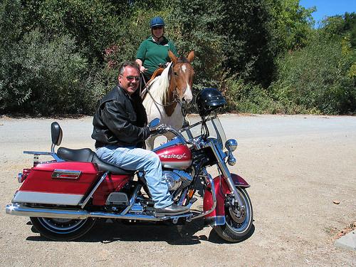 Nancy Brown, harley-davidson, motorcycle, horse