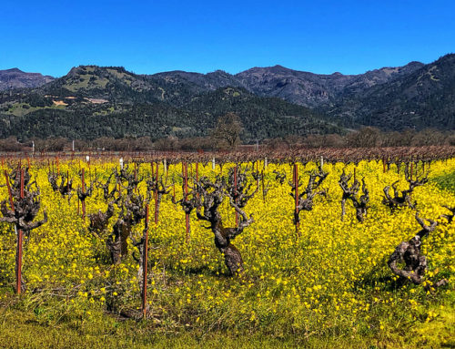 How to Do Calistoga Like a Local