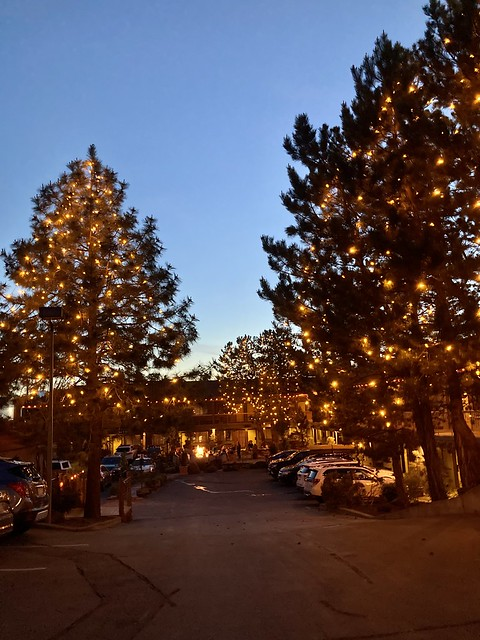 Twinkling lights brighten the pine trees at twilight at Campfire Hotel in Bend.