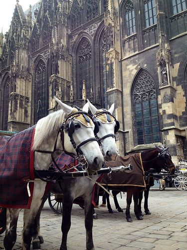 horses, St. Stephen's Cathedral, Vienna, Austria