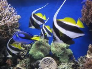 Clown Fish, Monterey Bay Aquarium, travel, Nancy D. Brown