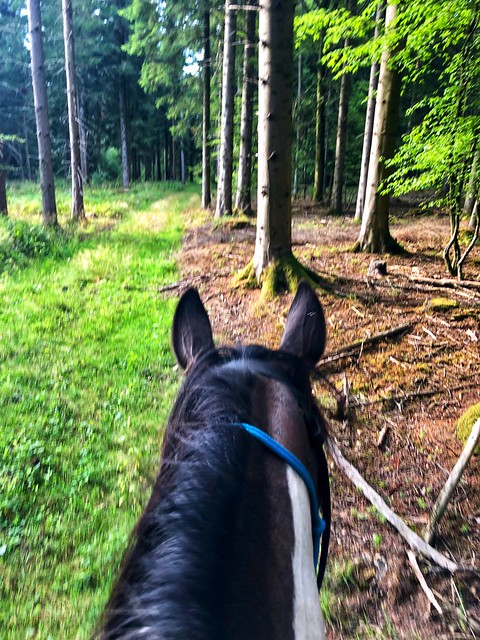 Horses ears perk up when he hears a deer walking in the forest in the French countryside of Troisfontaines.