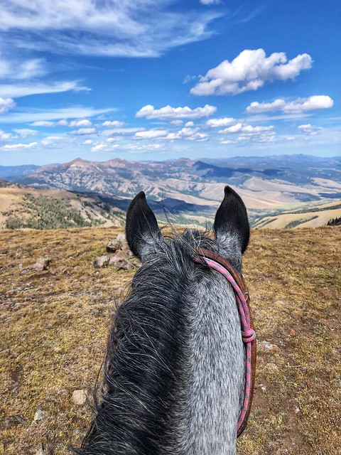 Looking out to Big Sky, Montana from between the ears of a horse at Yellowstone National Park.