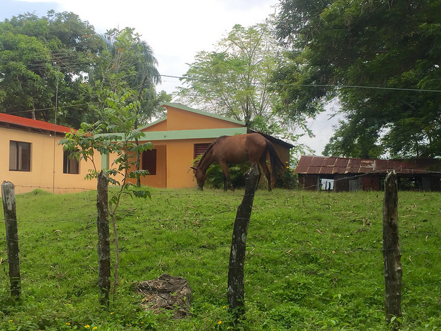 cupey, dominican republic, horse, fathom travel