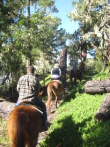 Del Monte Forest, horseback riding, travel, nancy d. brown