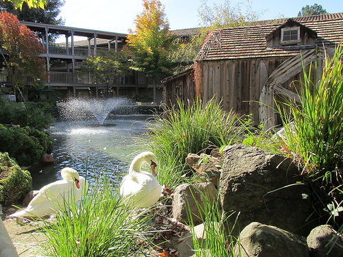"""""""Embassy Suites Napa Valley"""" swans, hotel, """"Embassy Suites"""""""