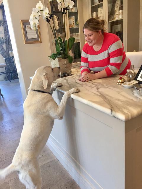 pet-friendly enchante hotel, dogs allowed enchante los altos hotel, northern california hotel near stanford university, labrador retriever