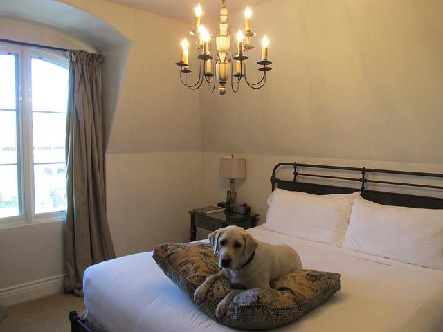 pet friendly room, enchante hotel, los altos, california in silicon valley