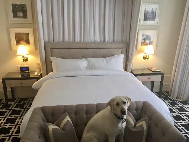 deluxe king, downtown palo alto boutique hotel, king bed, pet-friendly hotel room, garden court hotel