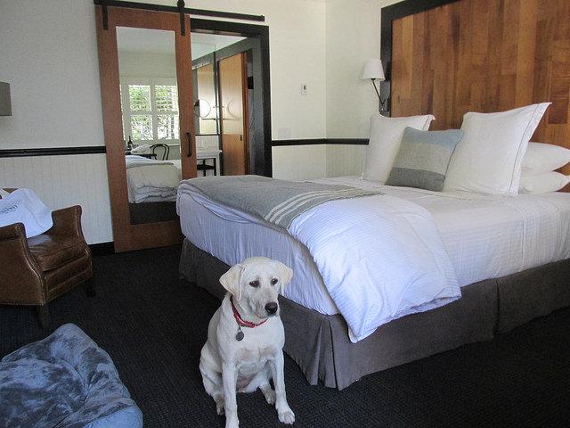 dog-friendly, king room, the hideaway carmel, carmel, california