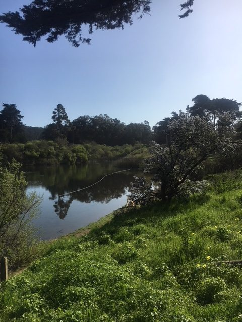 view of refurbished Mountain Lake Park in the Presidio
