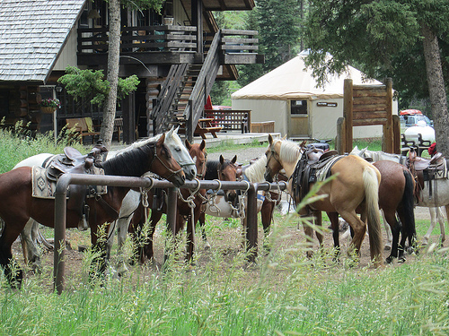 lone mountain ranch, horseback riding vacation