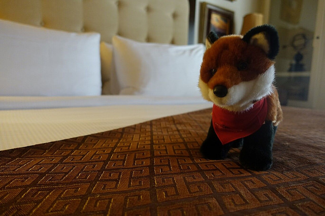 hotel room, la casa del zorro, plush fox, borrego springs, california, pillow