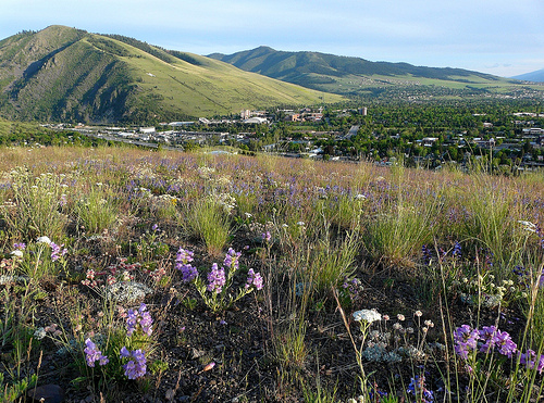 """Missoula wildflowers"""
