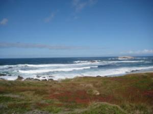 Monterey, pacific ocean, travel, nancy d. brown