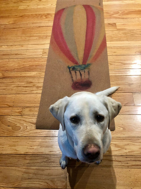 labrador retriever, bradford brenner yoga mat, 8 gifts for the traveler, eco-friendly yoga mat, hot air balloon
