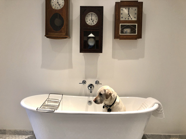 labrador retriever, bathtub, pet-friendly vagabonds house, carmel, california bed & breakfast
