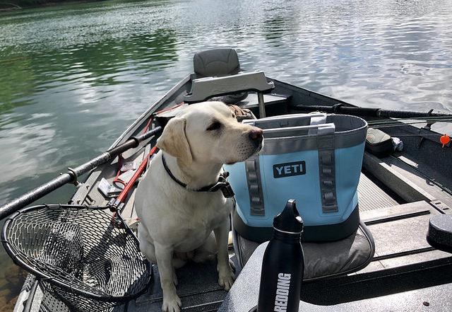 summer travel gear, yeti camino carryall bag, labrador retriever, fishing boat, sacramento river, california