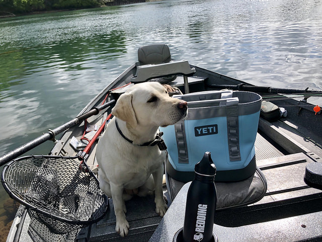summer travel gear, yeti camino carryall bag, labrador retriever, fishing boat, sacramento river, california