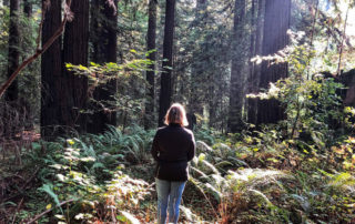 Nancy D Brown, travel blogger, forest bathing, redwood forest, northern california coast, white sierra travel apparel