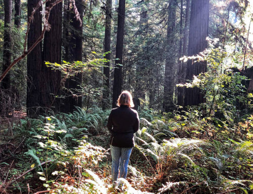Forest Bathing in Sonoma County